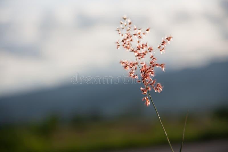 Un blackground de la flor foto de archivo