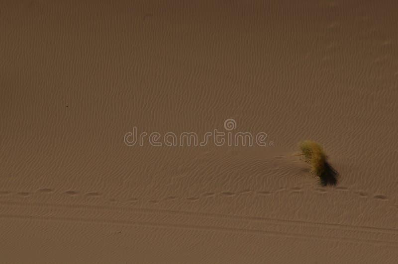 Un bloc d'herbe dans le désert image libre de droits