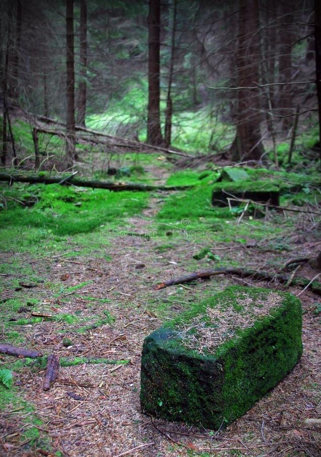 Un bloc de grès dans la forêt foncée et mystique photos stock