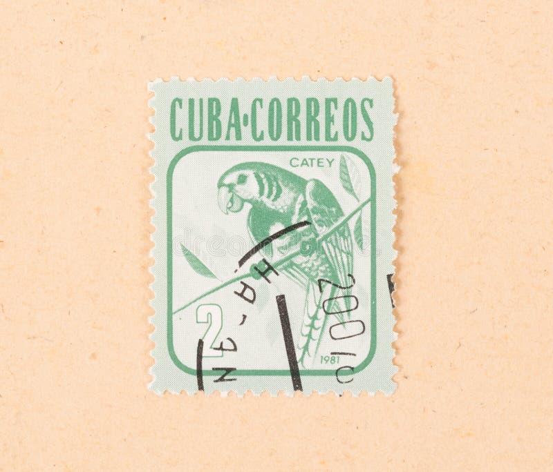 Un bollo stampato in Cuba mostra un pappagallo, circa 1981 fotografia stock