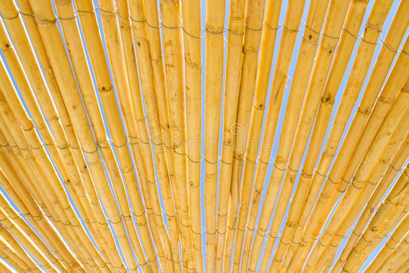 Un bon nombre de b?tons en bambou secs jaunes attach?s ainsi que le ciel bleu ? l'arri?re-plan images stock