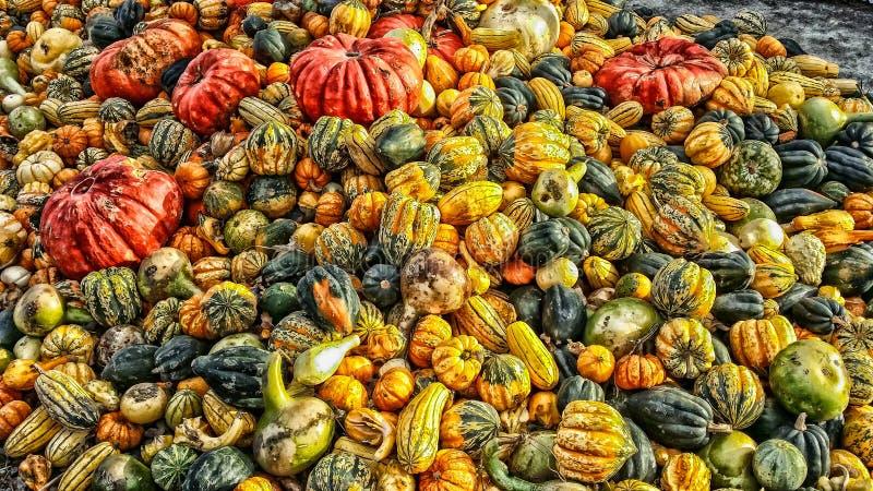 Un bon nombre de courges d'automne image libre de droits