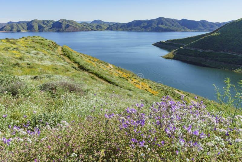 Un bon nombre de fleur de fleur sauvage chez Diamond Valley Lake images stock