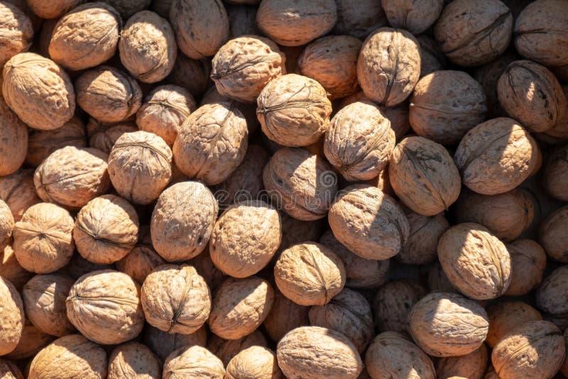 Un bon nombre de noix fraîches photo libre de droits