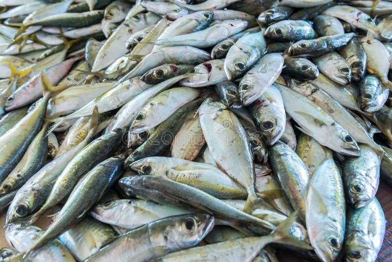 Un bon nombre de poissons image libre de droits
