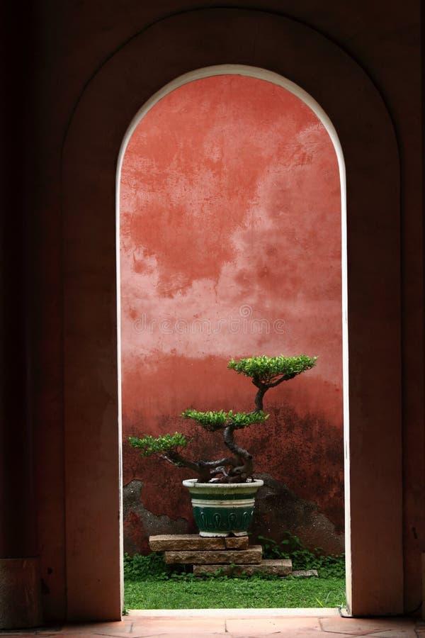 Un bonsai en Confucius, templo de s foto de archivo libre de regalías
