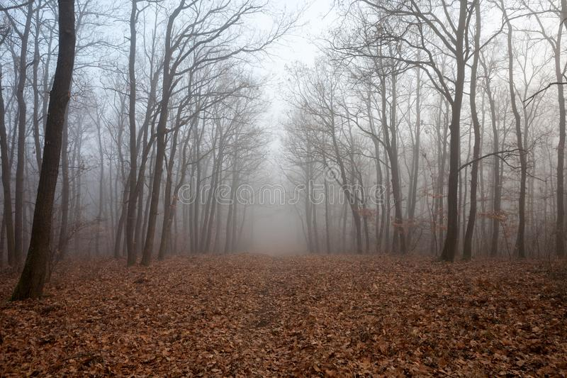 Un bosque brumoso fotos de archivo libres de regalías