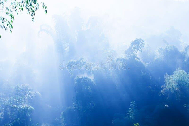 Un bosque de bambú tranquilo en brumoso azul fotografía de archivo libre de regalías