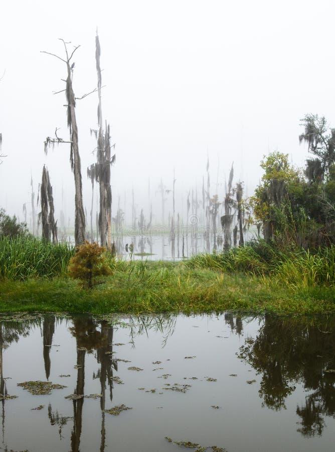 Un bosque de los árboles de ciprés muertos y de muertes, isla de Guste fotos de archivo