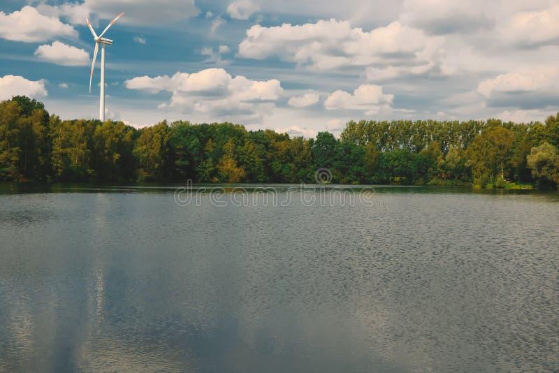 Un bosque hermoso en el agua foto de archivo