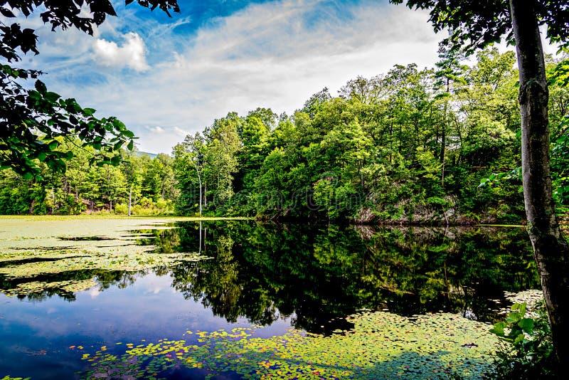 Un bosque reflejado en un lago con Lily Pads fotografía de archivo libre de regalías