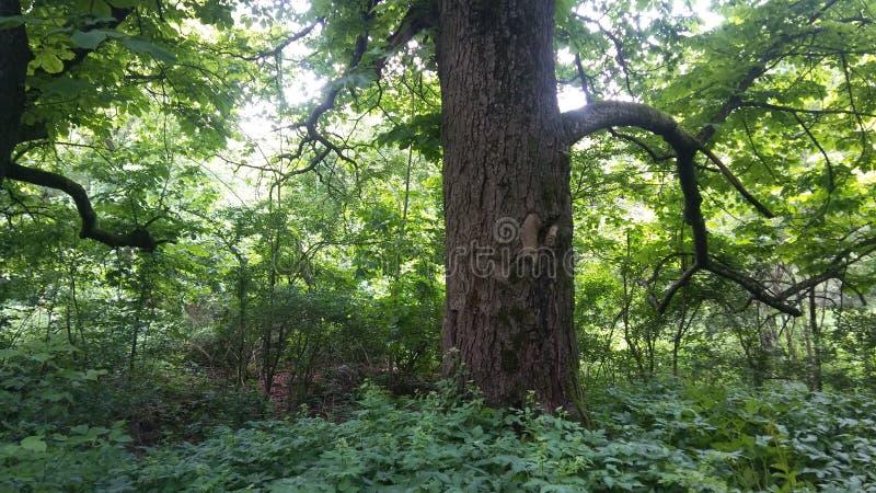 Un bosque verde hermoso foto de archivo libre de regalías