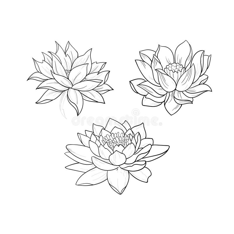 Un bosquejo de lotos hermosos en un ornamento agraciado en un fondo blanco imágenes de archivo libres de regalías