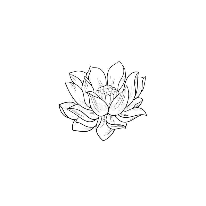 Un bosquejo de un loto hermoso en un fondo blanco imágenes de archivo libres de regalías