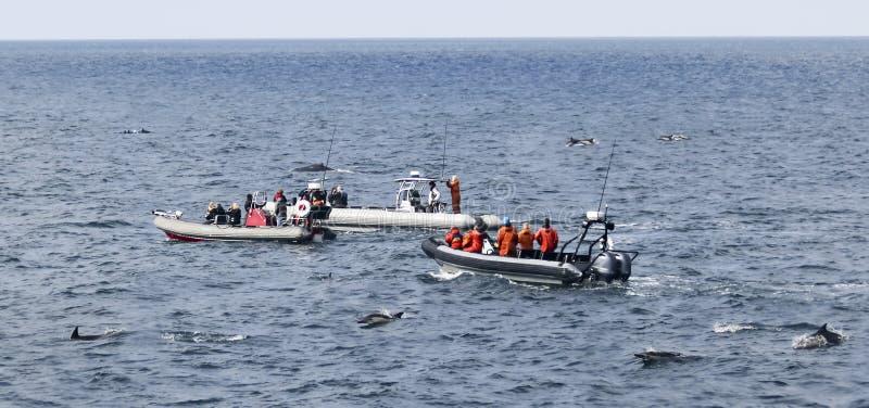 Un bosse et observateurs de baleine entourés par des dauphins, San Diego, CA, Etats-Unis photographie stock libre de droits