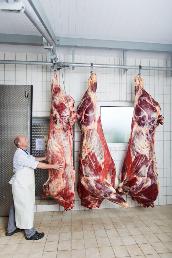 Un boucher vérifiant le corps épluché d'une vache images stock