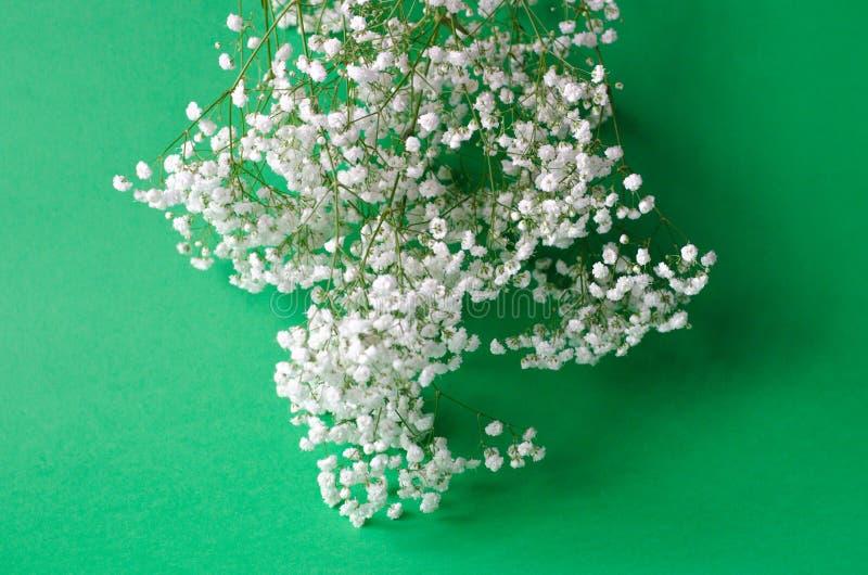 Un bouquet du gypsophila blanc sur un fond vert images libres de droits