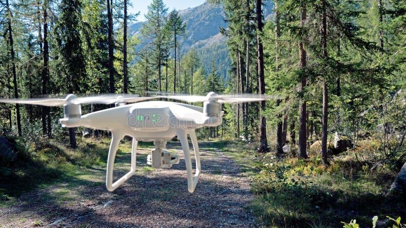 Un bourdon plane sur un chemin de région boisée image stock