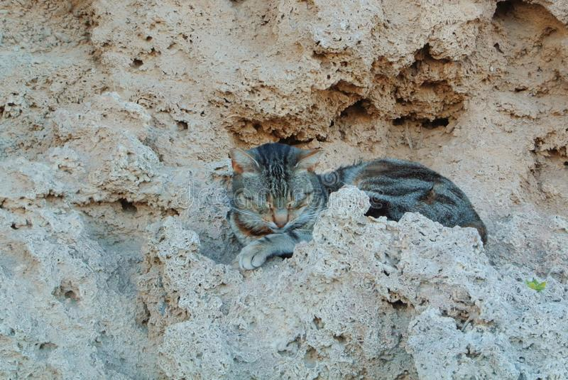 Un brun a abandonné le chat dormant sur les roches de pierres dans la rue photographie stock libre de droits