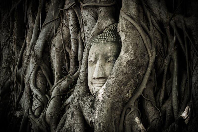 Un Buda hace frente en una raíz antigua foto de archivo
