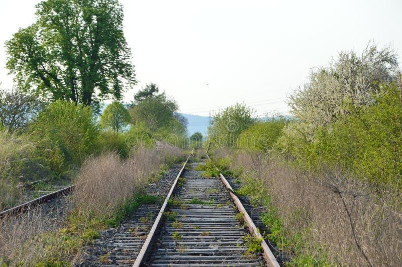 Un buisson sauvage se développe et s'épanouit au milieu d'une ligne ferroviaire le long des voies ferrées La ligne, cependant, es photo stock
