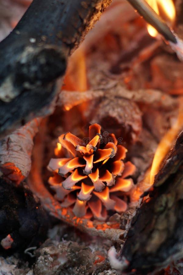 Un cône brûle dans un feu prenez soin de la protection des forêts de la nature Paix Incendie Pins photo libre de droits