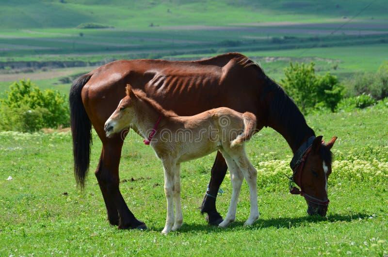 Download Un caballo con el bebé foto de archivo. Imagen de caballo - 64201428