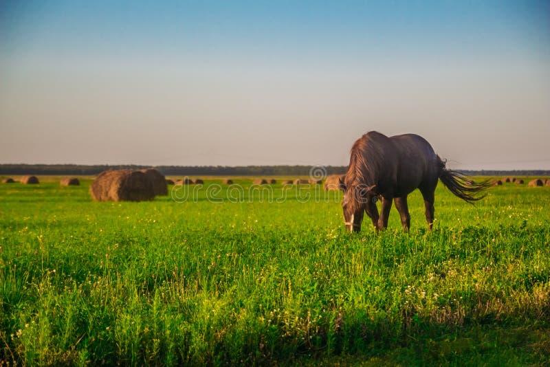 Un caballo en un campo verde imagenes de archivo