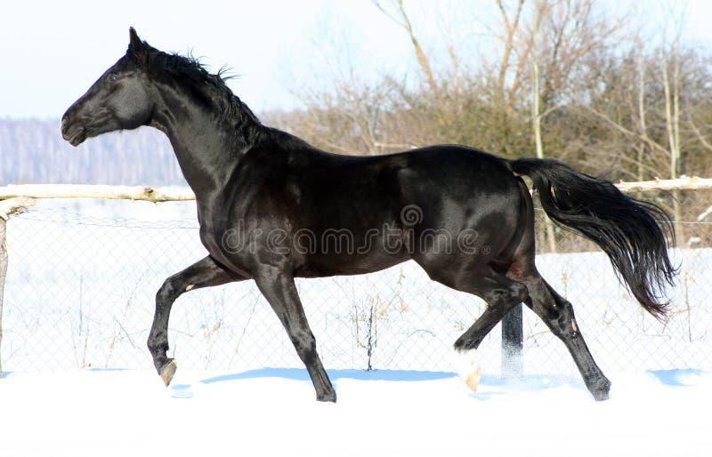 Un caballo en la libertad fotografía de archivo
