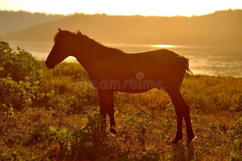 Un caballo en la puesta del sol fotografía de archivo libre de regalías