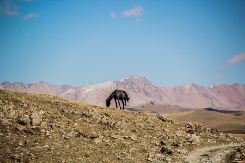 Un caballo en las montañas de Kirgiz imagenes de archivo