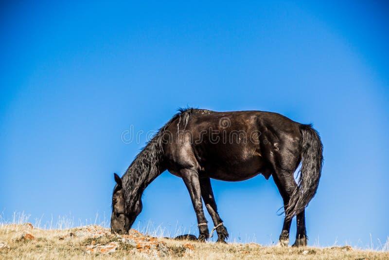 Un caballo en las montañas de Kirgiz foto de archivo