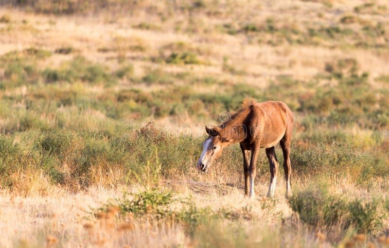 Un caballo en un pasto en naturaleza fotografía de archivo libre de regalías