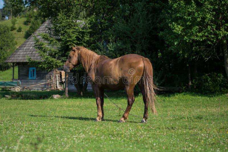 Un caballo hermoso en la granja imagen de archivo