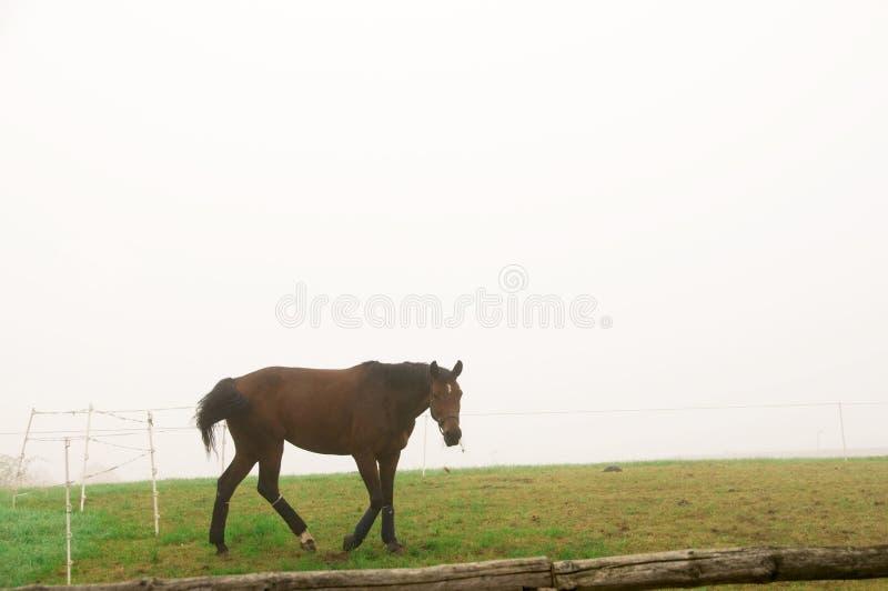 Un caballo que pasta en la niebla. foto de archivo