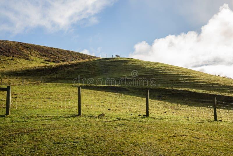 Un caballo que se coloca majestuoso en sí mismo encima de una colina imagen de archivo libre de regalías