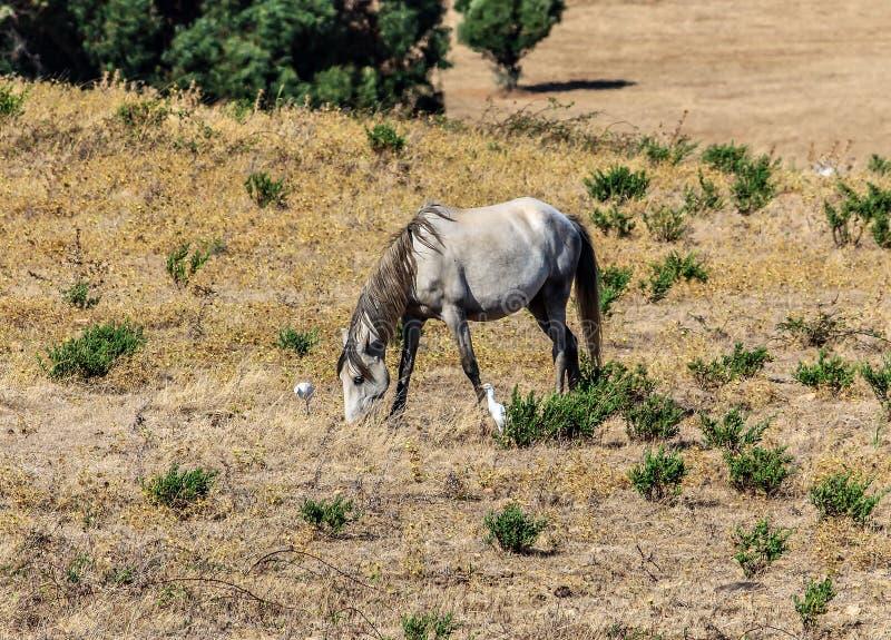 Un caballo solitario que pasta foto de archivo libre de regalías