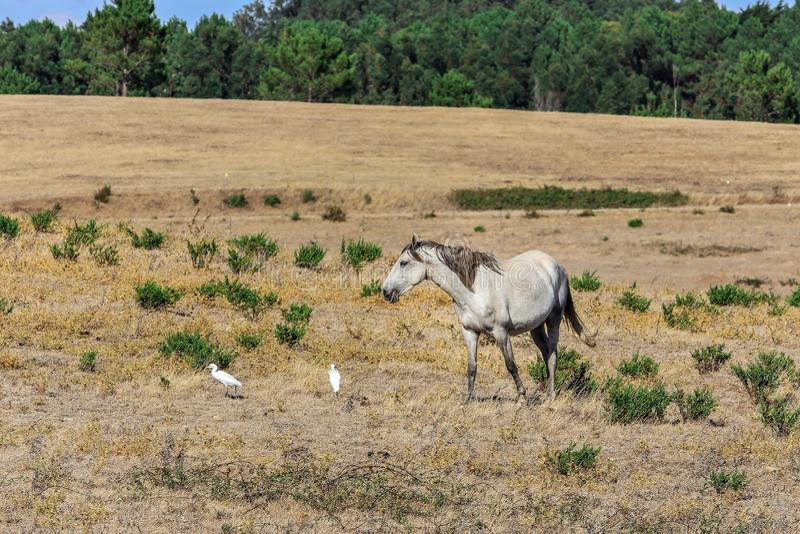 Un caballo solitario que pasta imágenes de archivo libres de regalías
