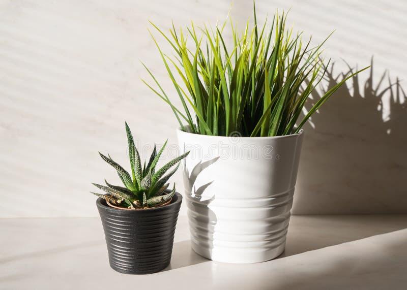 Un cactus di due piante in vaso ed erba artificiale immagini stock