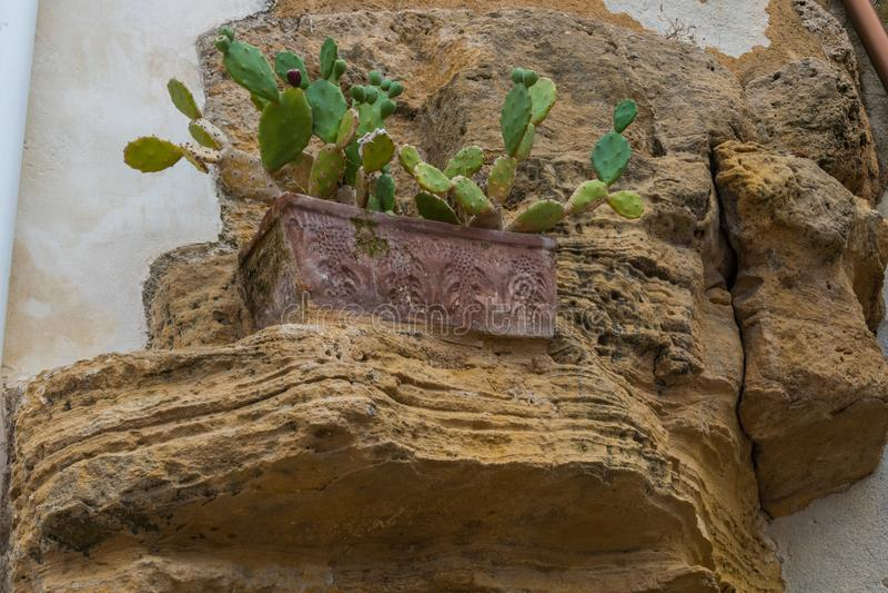 Un cactus en un pote tallado imagen de archivo libre de regalías