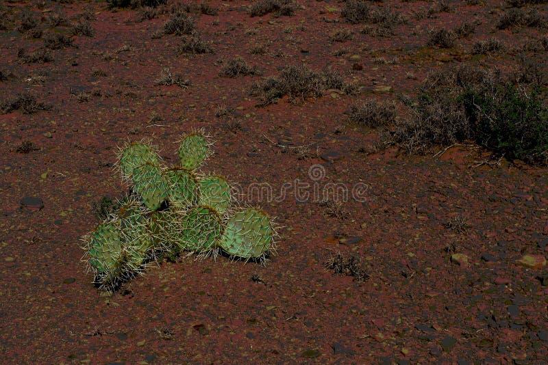 Un cactus espinoso imagen de archivo libre de regalías