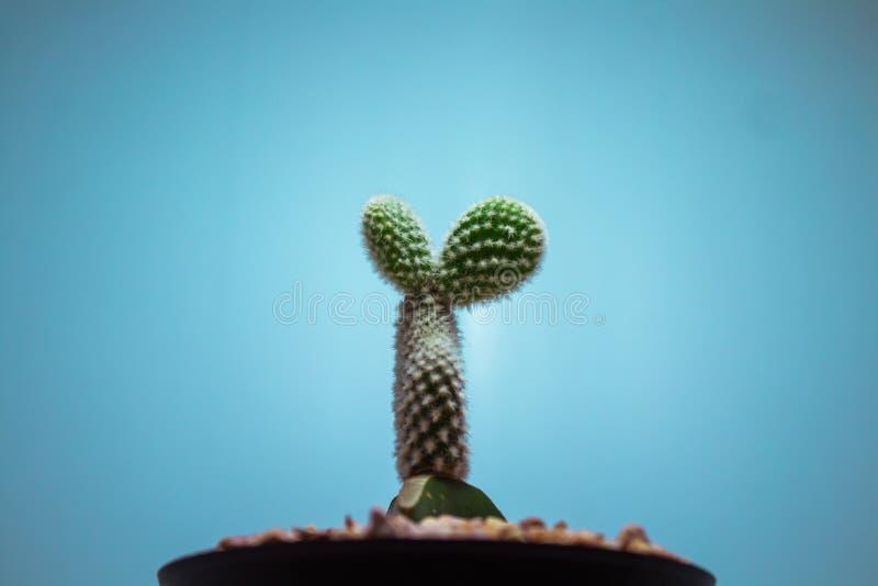 Un cactus mignon dans un pot images stock