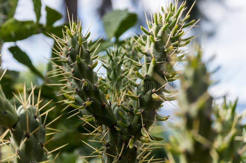 Un cactus verde imagenes de archivo