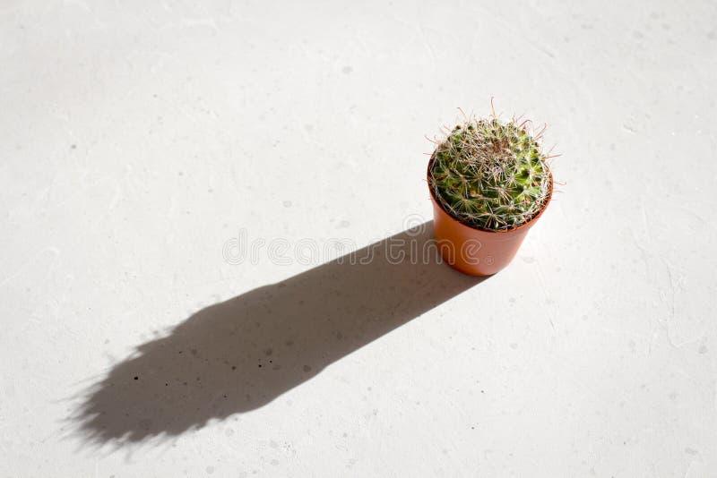 Un cactus verde redondo del mammilaria en un pote de la terracota se coloca en el sol y echa una sombra larga, dura fotos de archivo libres de regalías