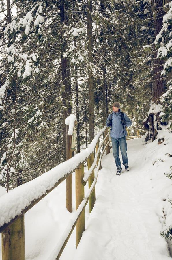 Un caminante que camina en una pista de senderismo del invierno fotos de archivo