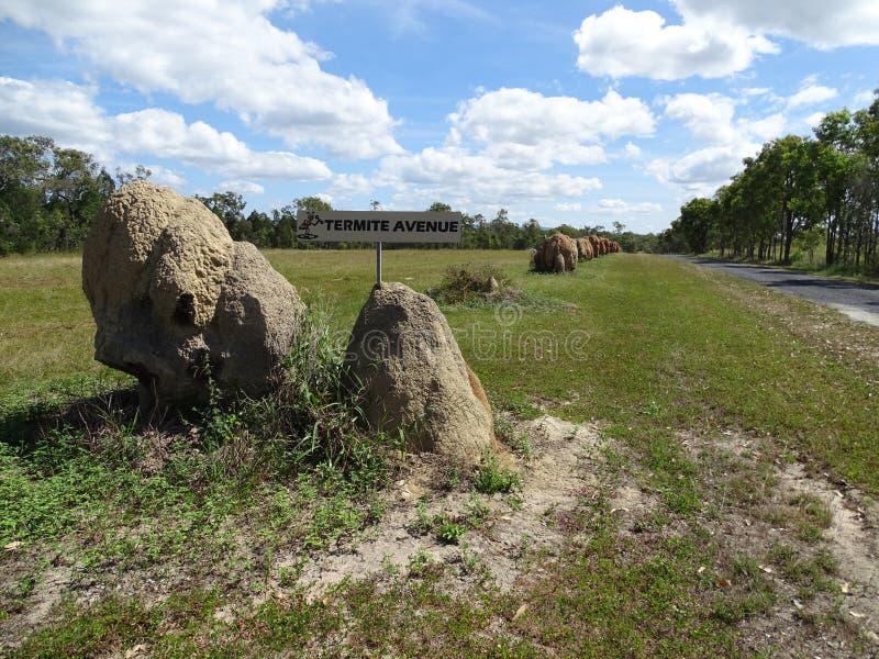 Un camino alineado con los montones de la termita nombró a Termite Avenue foto de archivo