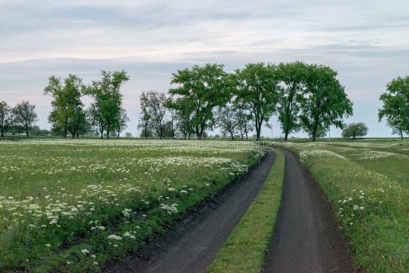 Un camino curvado con las flores que llevan la manera, con los árboles en los vagos fotografía de archivo
