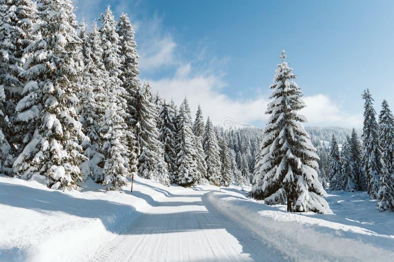 Un camino de la montaña y pinos nevados imagen de archivo libre de regalías