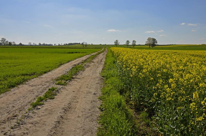 Un camino de tierra del país por los campos del canola foto de archivo libre de regalías