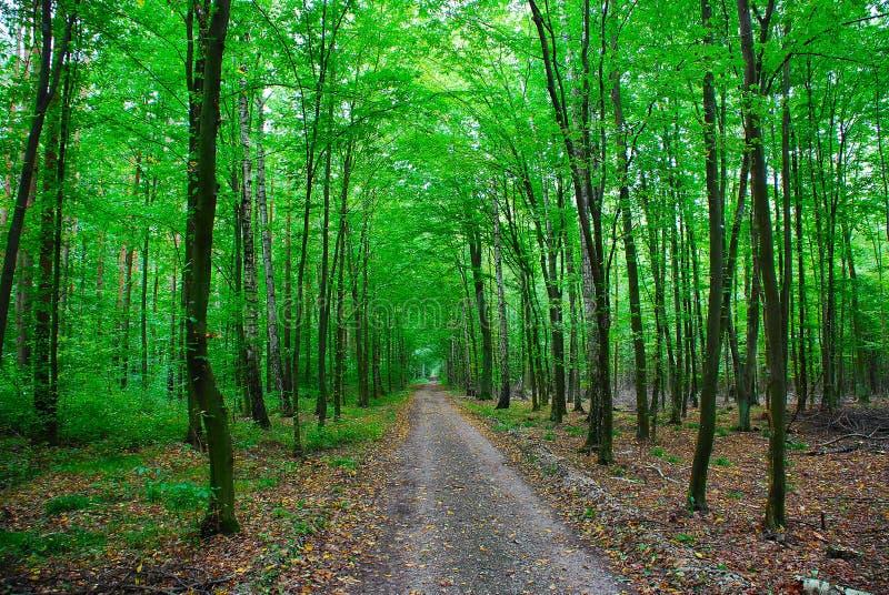 Un camino en el bosque imágenes de archivo libres de regalías